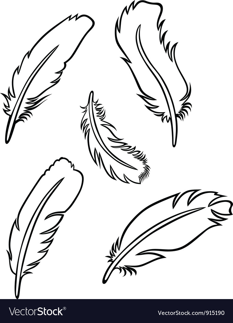 Feather set vector | Price: 1 Credit (USD $1)