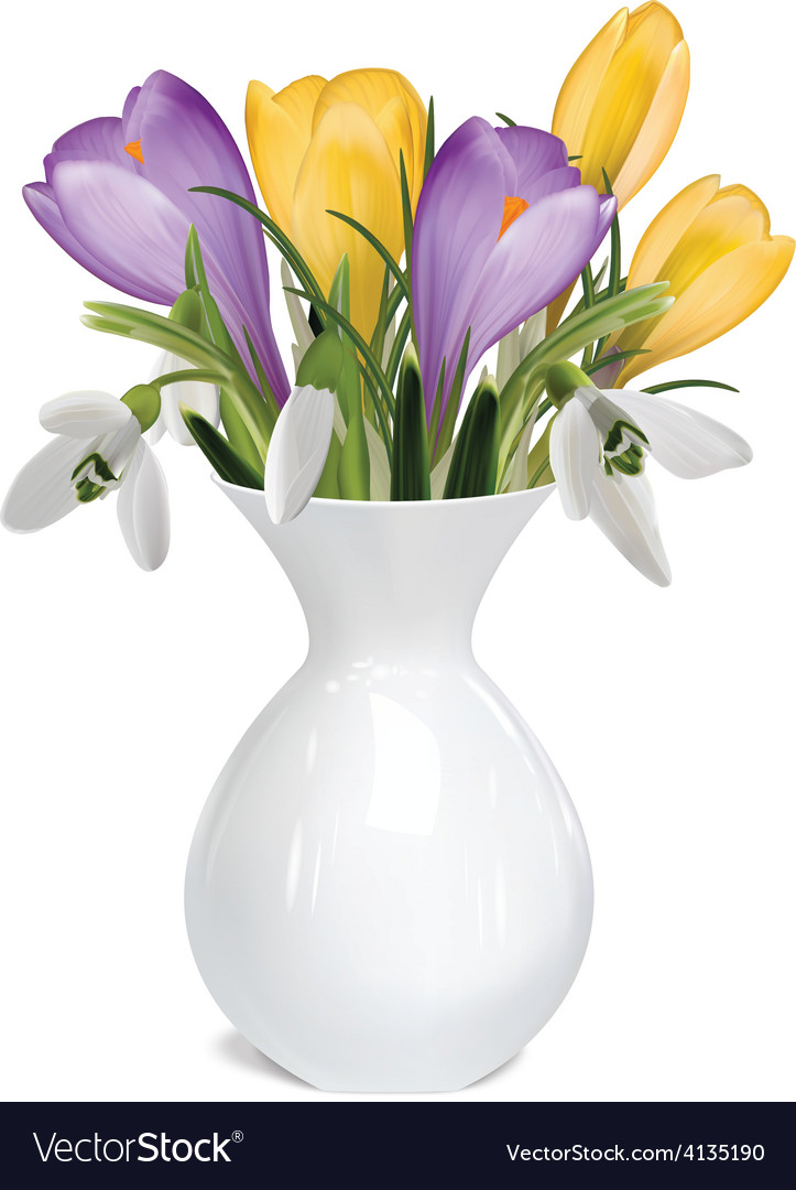 Spring bouquet of crocuses and snowdrops in vase vector | Price: 3 Credit (USD $3)