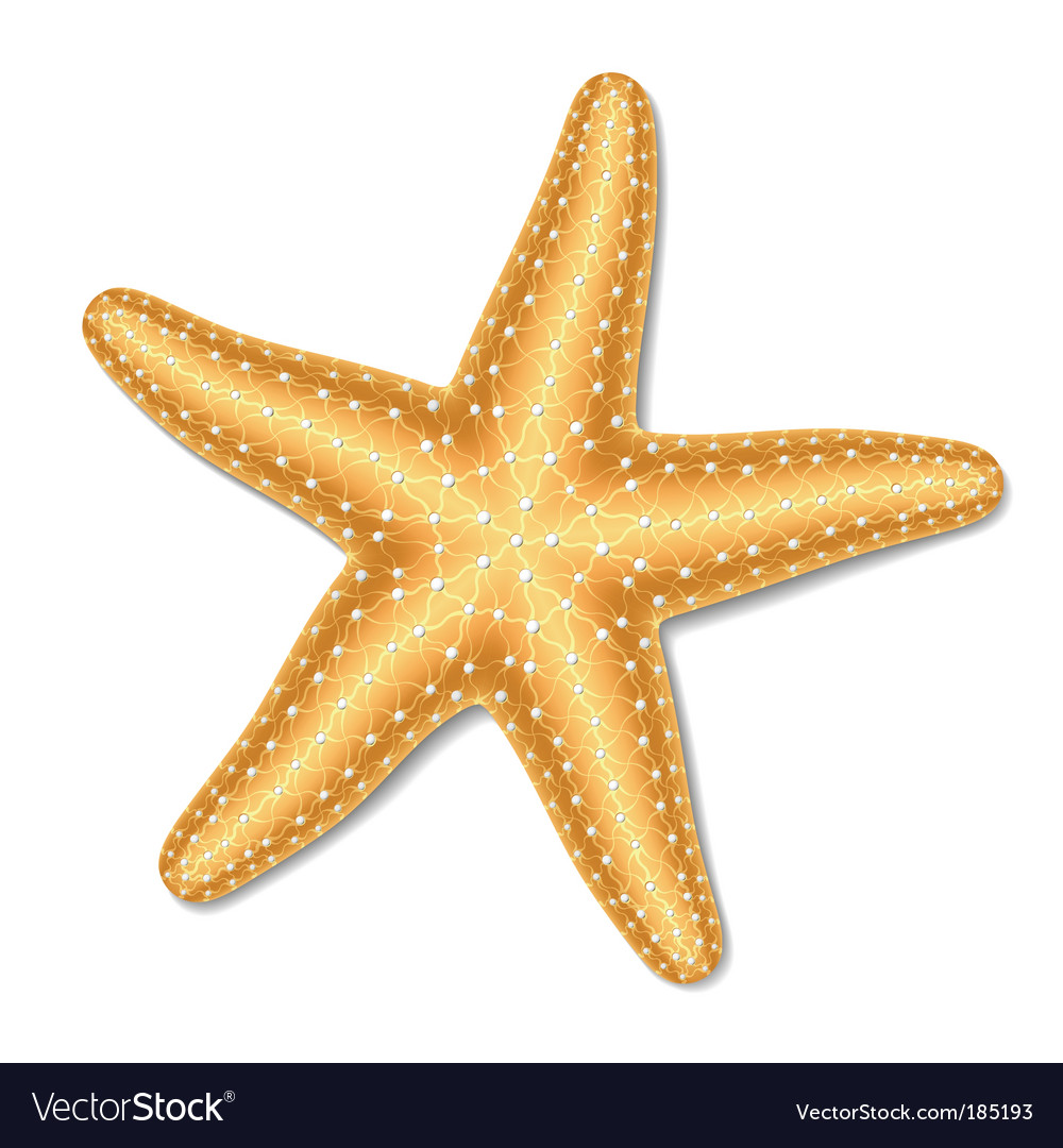Starfish vector | Price: 1 Credit (USD $1)