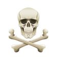 Skull crossbones isolated vector