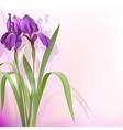 Purple iris flowers vector