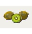 Ripe kiwi vector