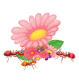 Fresh flowers with ants vector