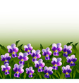 A lot of violet pansy flowers vector