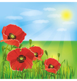 Nature background with flowers poppies vector