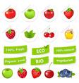 Eco set organic food vector
