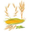 Cereal plants set vector