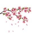 Sakura blossom japanese cherry tree vector