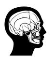 Human head with skull vector