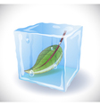 Ice cube with leaf vector
