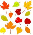 Autumn leaves on white vector
