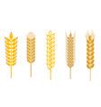 Cereal design elements vector