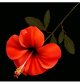 Beautiful red flower on a black background vector