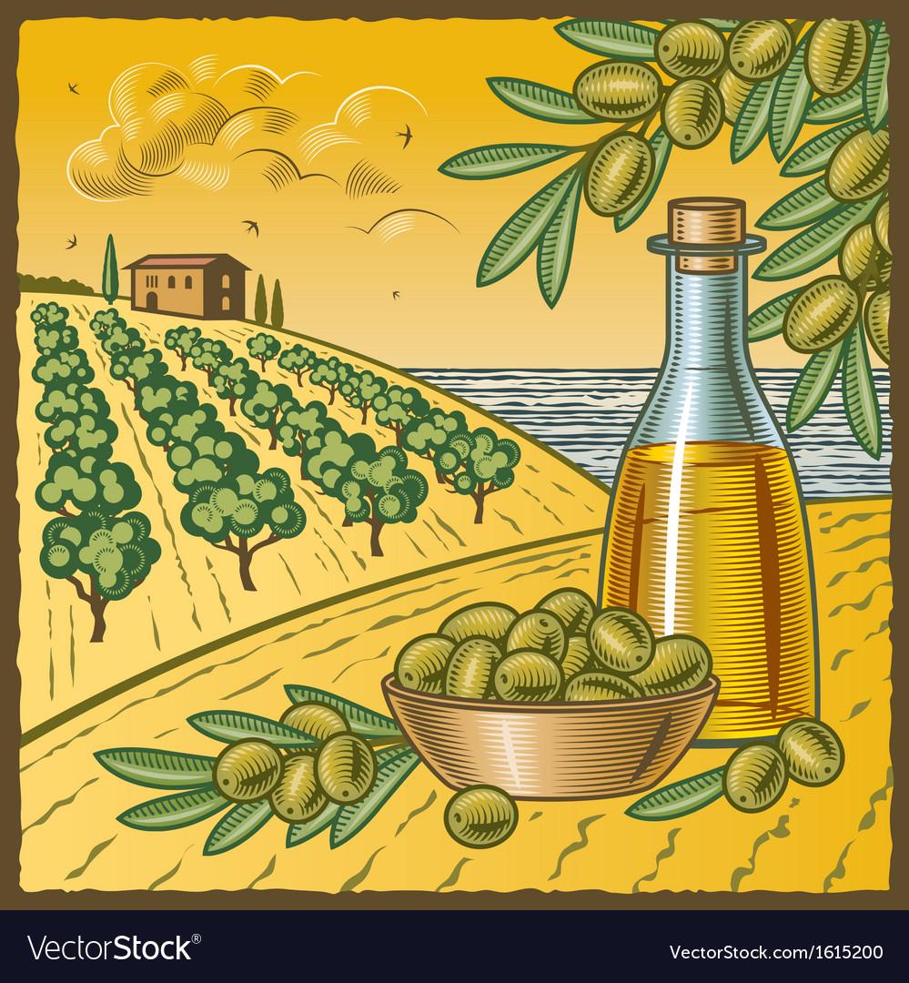 Olive harvest vector | Price: 1 Credit (USD $1)