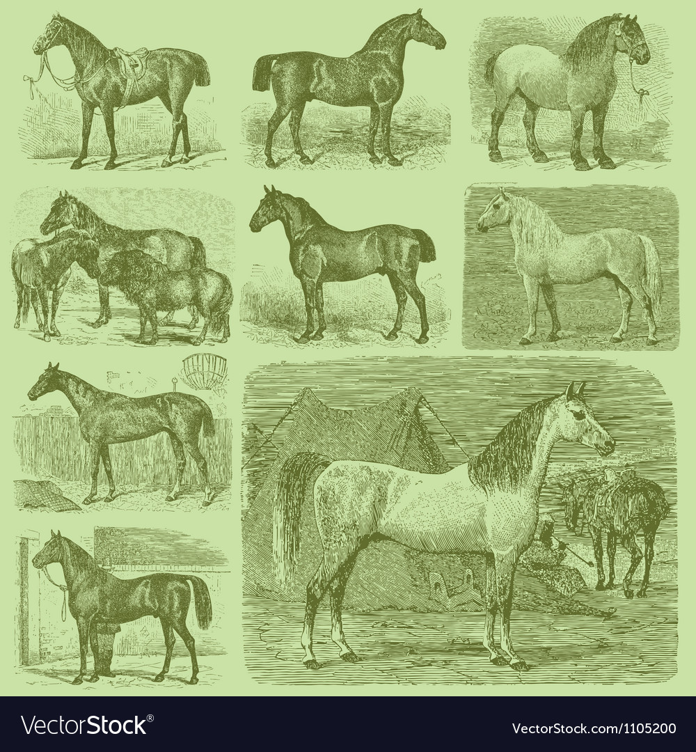 Set of 9 engraved horses vector | Price: 1 Credit (USD $1)