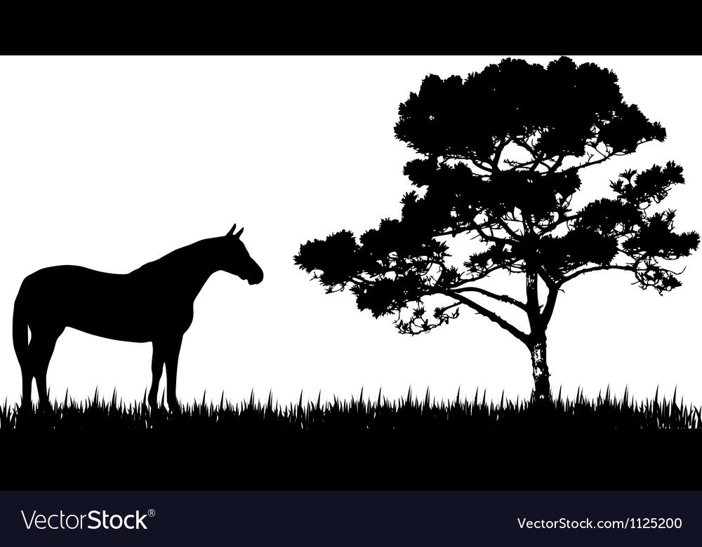 Silhouette of horse and tree vector | Price: 1 Credit (USD $1)