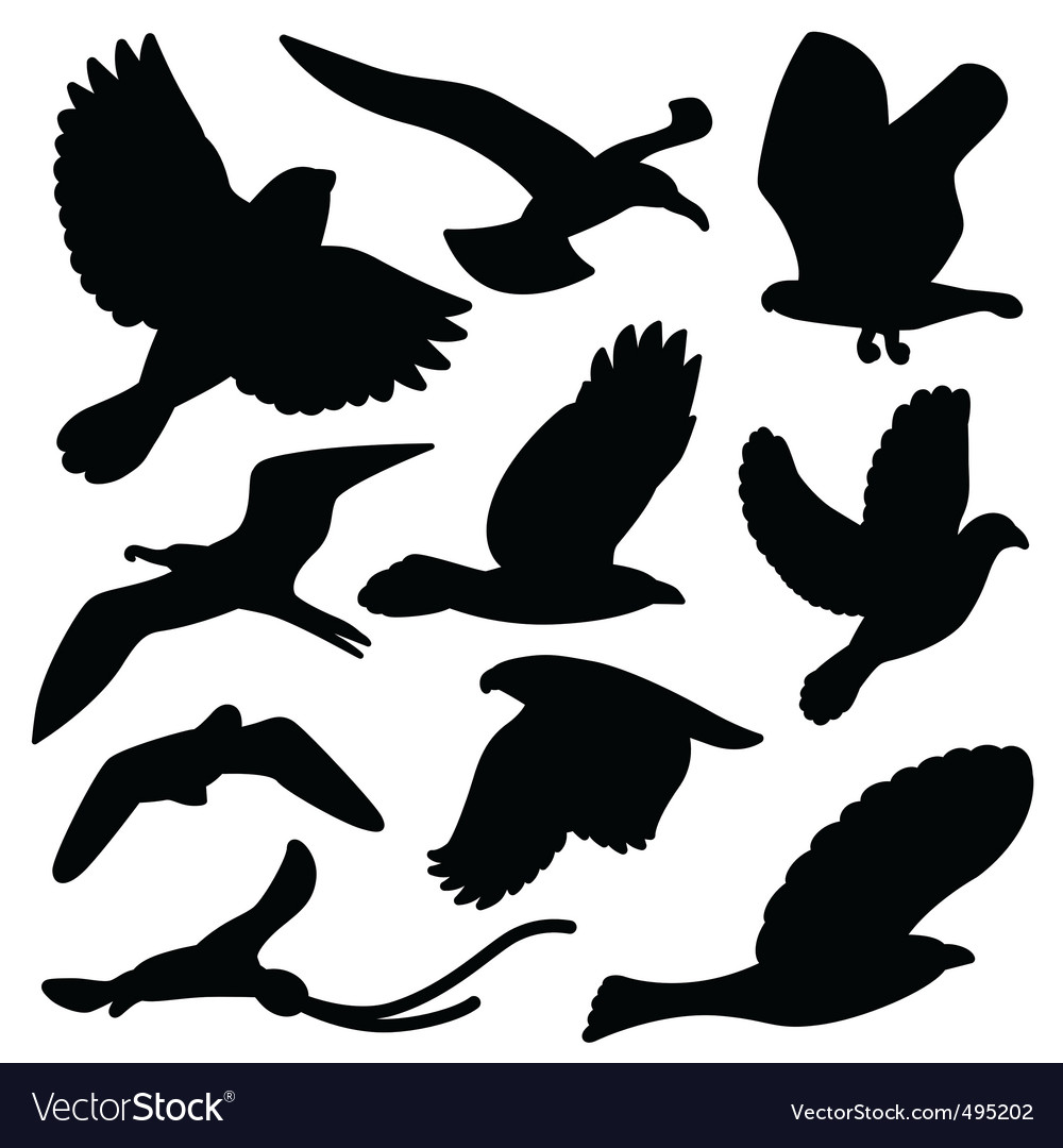 Bird silhouette vector | Price: 1 Credit (USD $1)