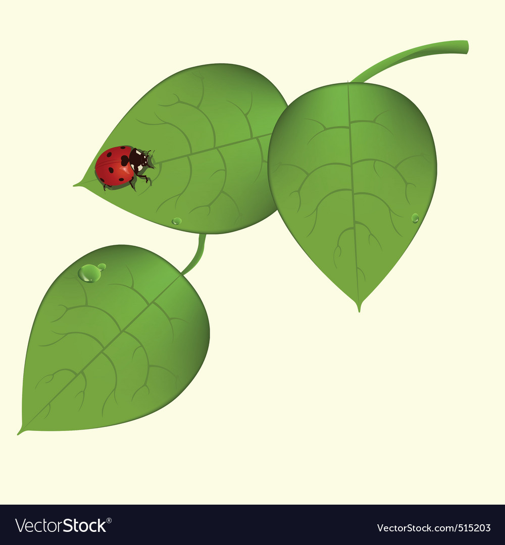 Funky ladybug vector | Price: 1 Credit (USD $1)