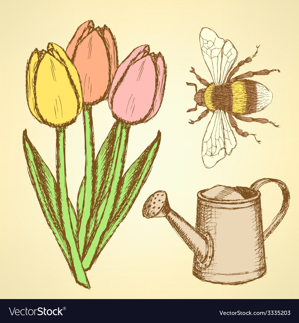 Sketch tulip bee and watering can vector | Price: 1 Credit (USD $1)