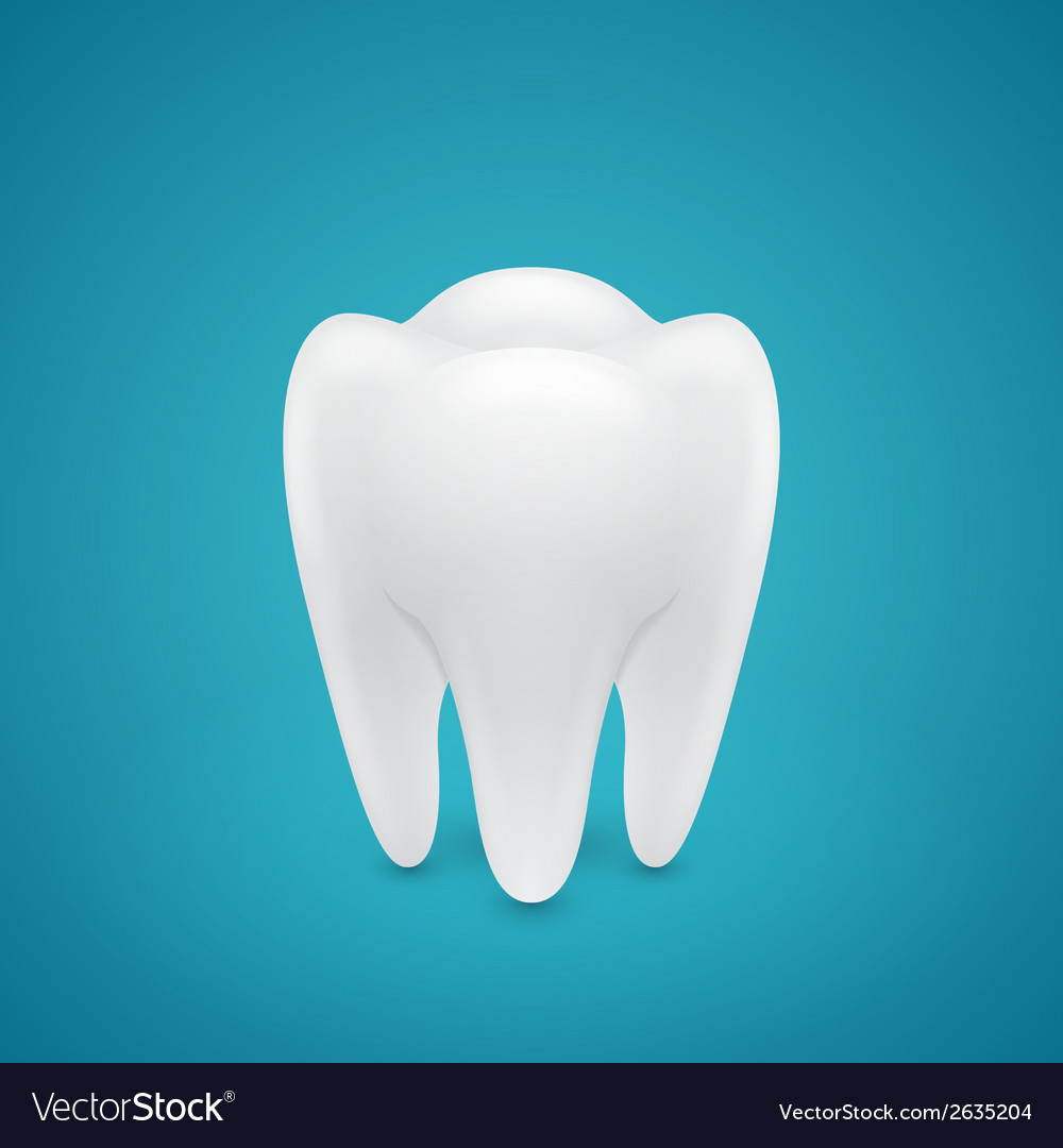 Healthy human tooth vector | Price: 1 Credit (USD $1)