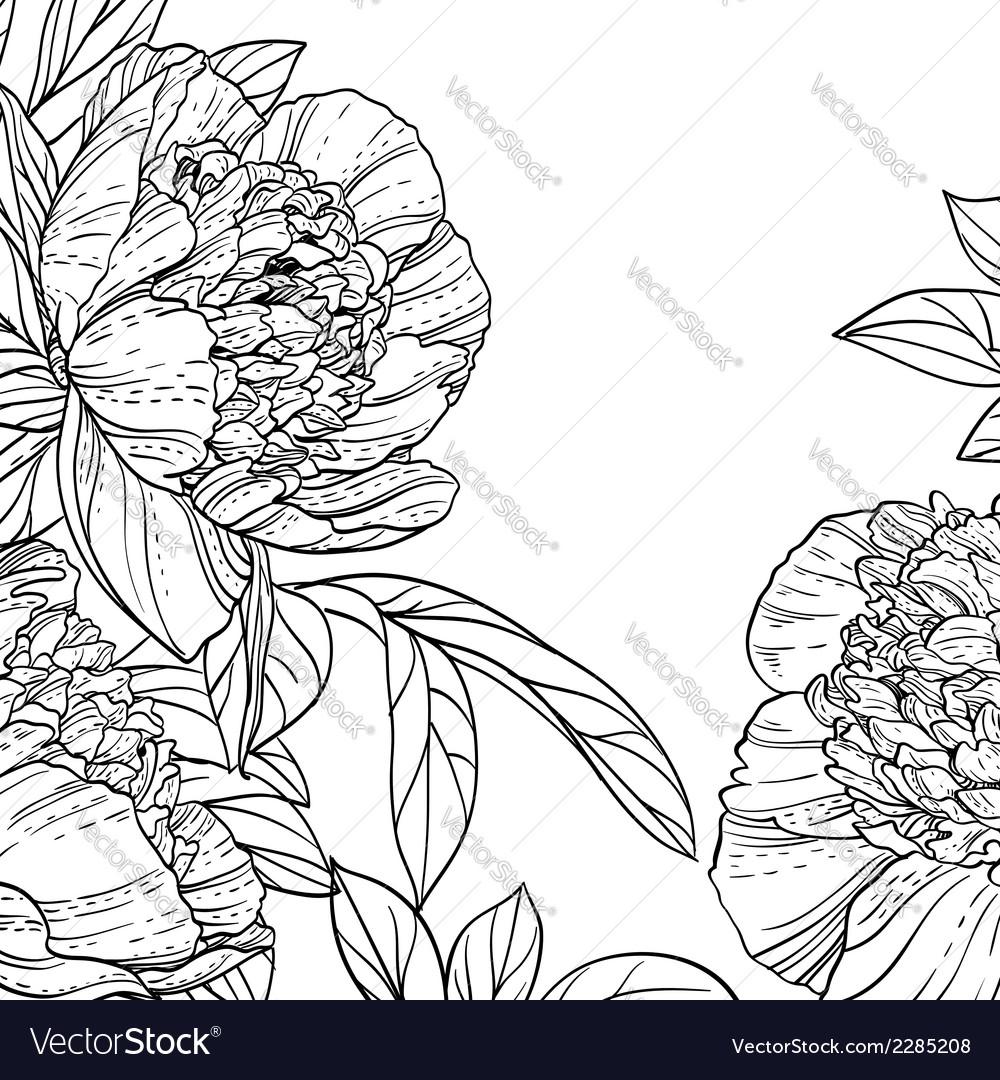Peonies black line art background vector | Price: 1 Credit (USD $1)