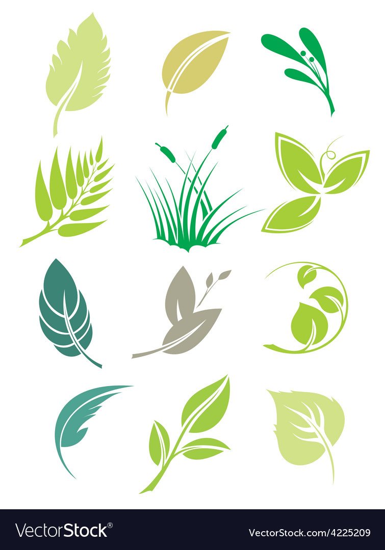 Set of green leaves design elements vector | Price: 1 Credit (USD $1)