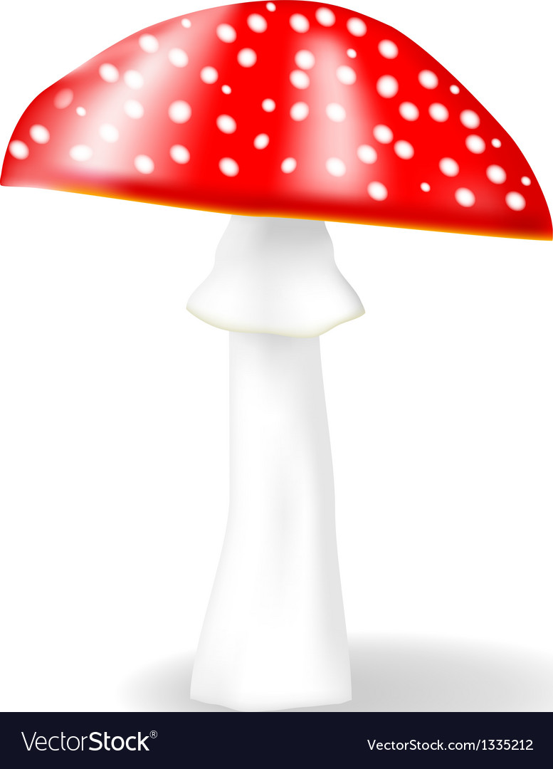 Fly agaric vector | Price: 1 Credit (USD $1)