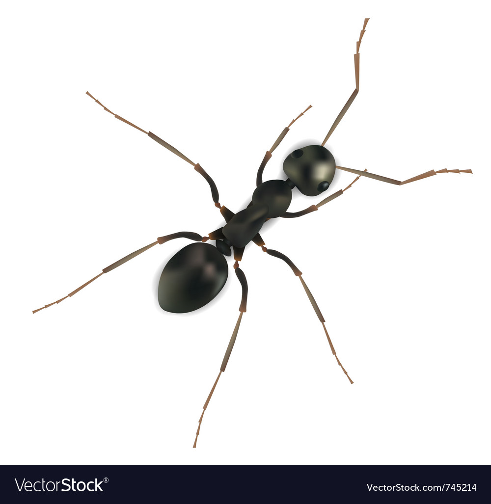 Realistic ant vector | Price: 1 Credit (USD $1)