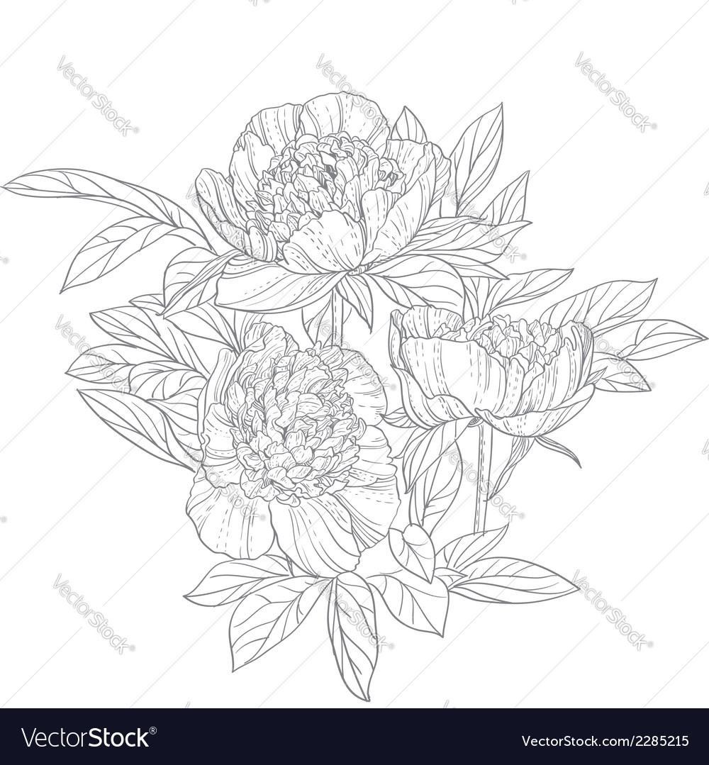 Peonies line art isolated on white background vector | Price: 1 Credit (USD $1)