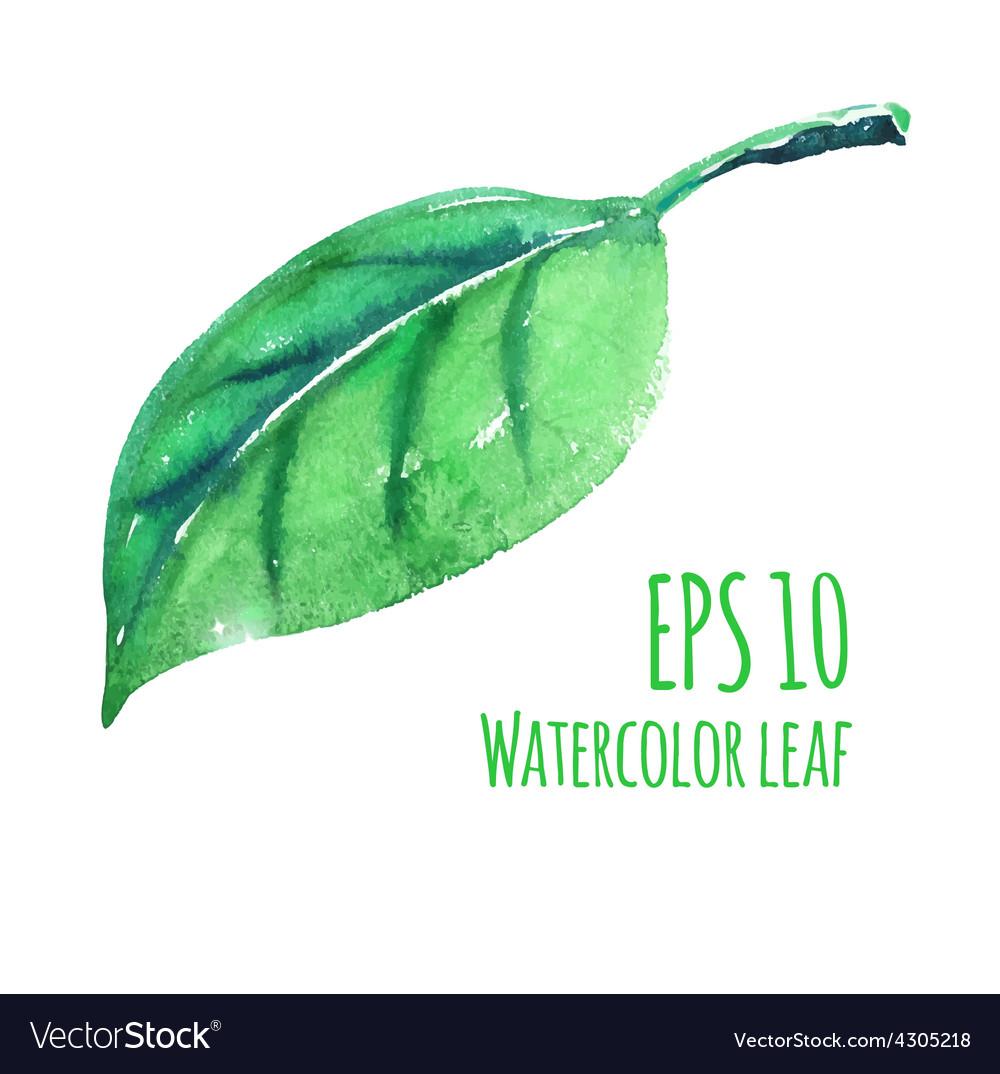 Watercolor leaf vector   Price: 1 Credit (USD $1)