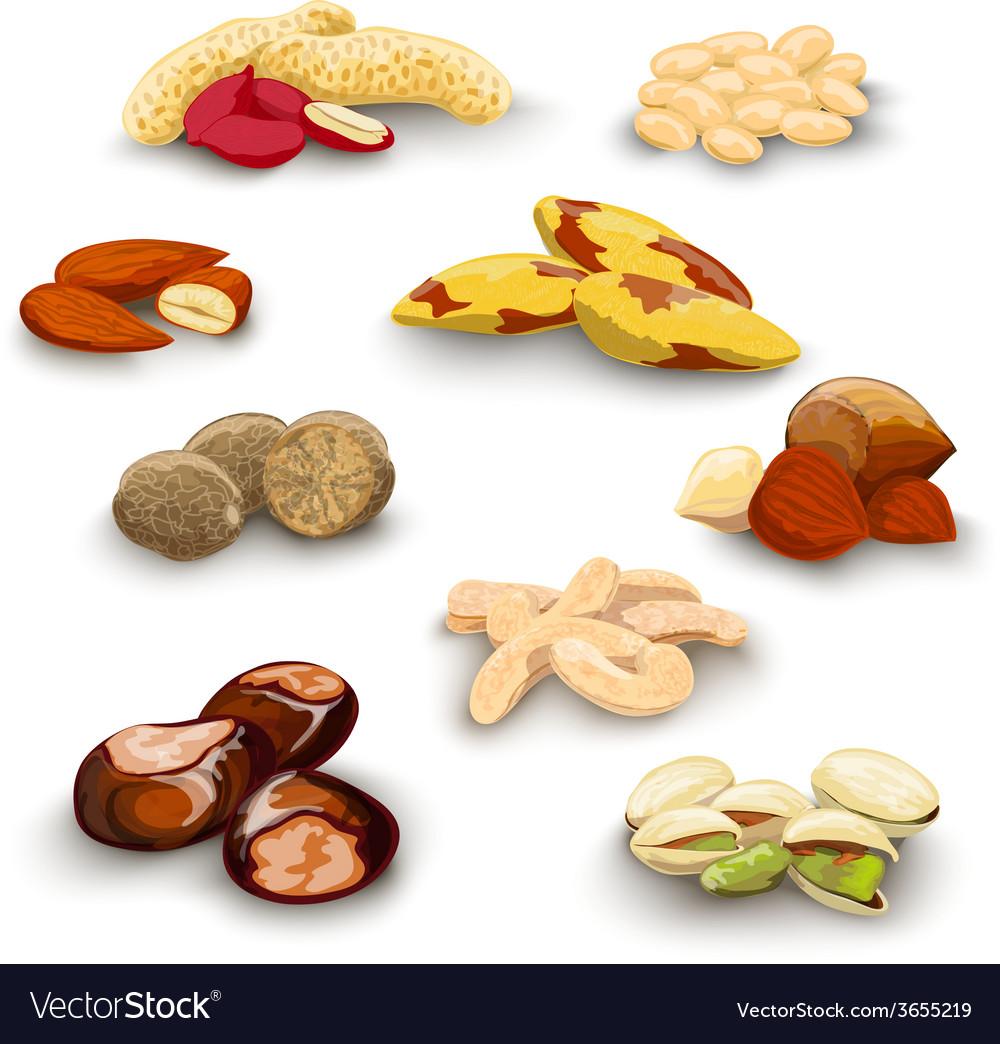 Nuts decorative set vector | Price: 1 Credit (USD $1)