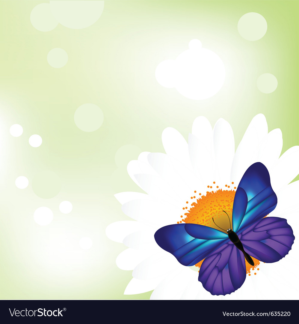 Butterfly camomile vector | Price: 1 Credit (USD $1)