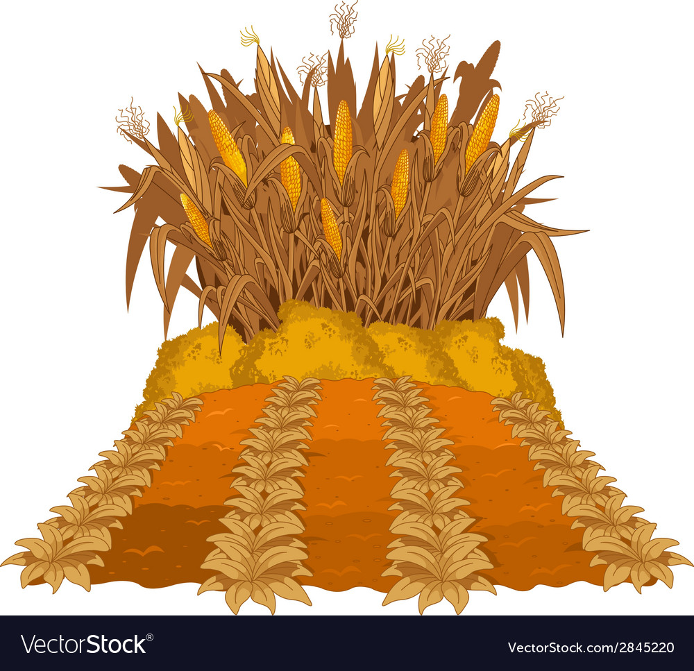 Planting corn vector | Price: 1 Credit (USD $1)