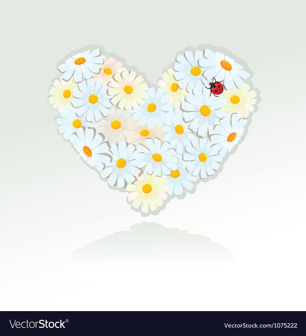 Heart is made of white daisies - valentines day vector | Price: 1 Credit (USD $1)