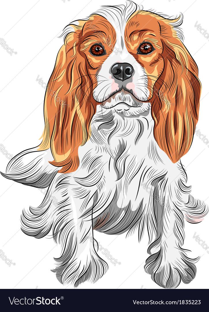 Dog cavalier king charles spaniel vector | Price: 3 Credit (USD $3)
