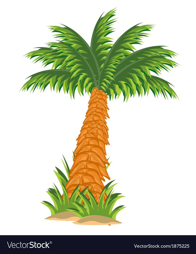Tree palm vector | Price: 1 Credit (USD $1)