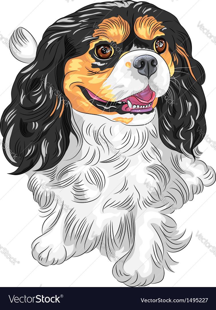 Dog cavalier king charles spaniel vector | Price: 1 Credit (USD $1)
