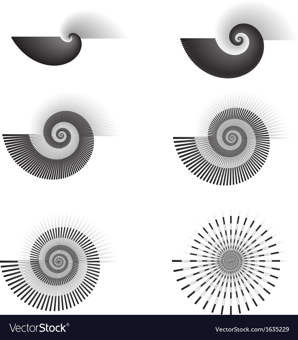 Shell swirl vector | Price: 1 Credit (USD $1)