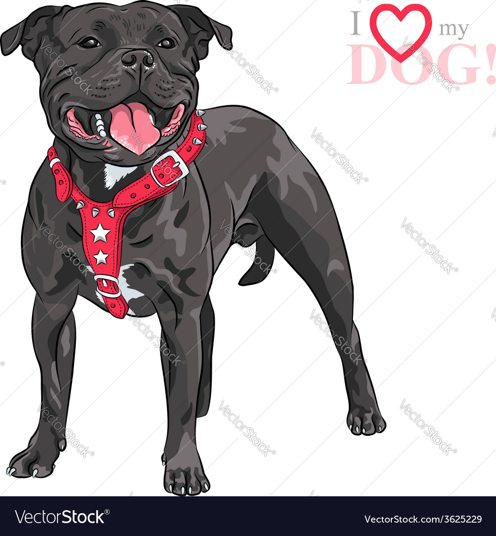 Sketch dog staffordshire bull terrier breed vector | Price: 1 Credit (USD $1)