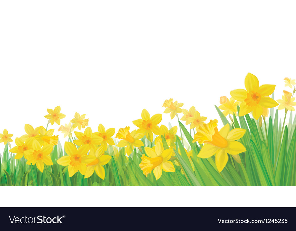 Daffodil flowers vector | Price: 1 Credit (USD $1)