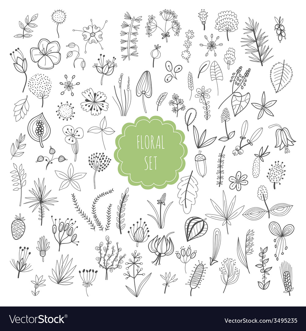 Floral set plants and herbs vector