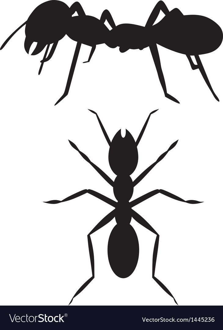 Silhouette ant vector | Price: 1 Credit (USD $1)
