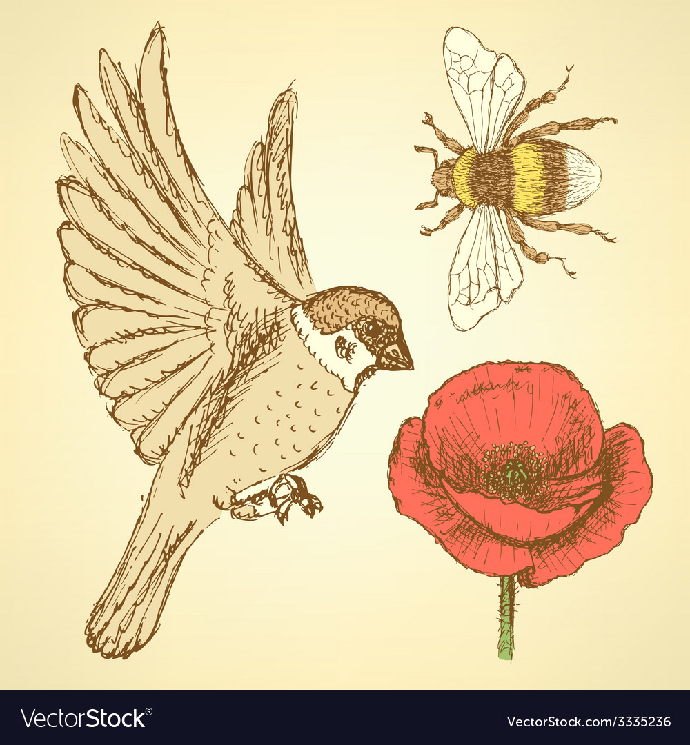 Sketch poppy bee and sparrow in vintage style vector | Price: 1 Credit (USD $1)