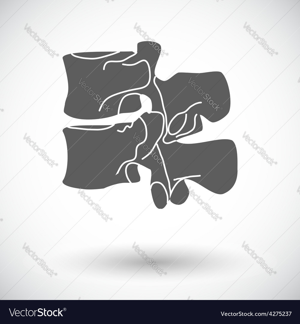 Anatomy spine icon vector | Price: 1 Credit (USD $1)