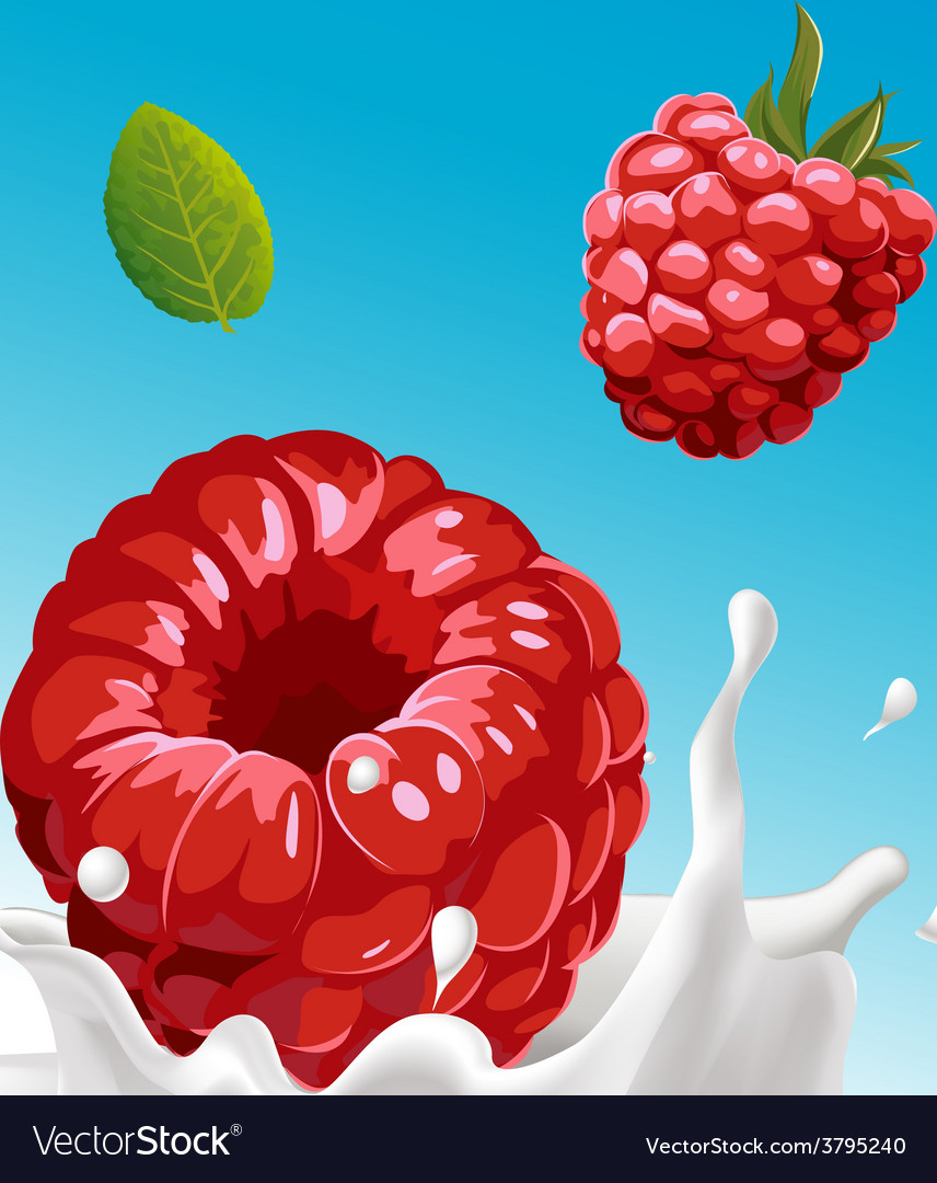 Splash of milk with raspberry  with blue ba vector
