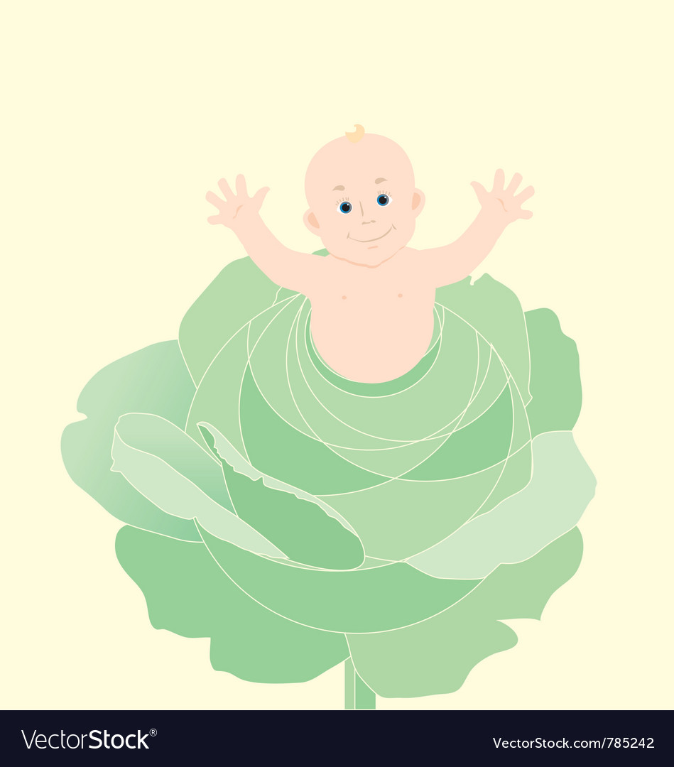 Newborn baby in cabbage vector | Price: 1 Credit (USD $1)
