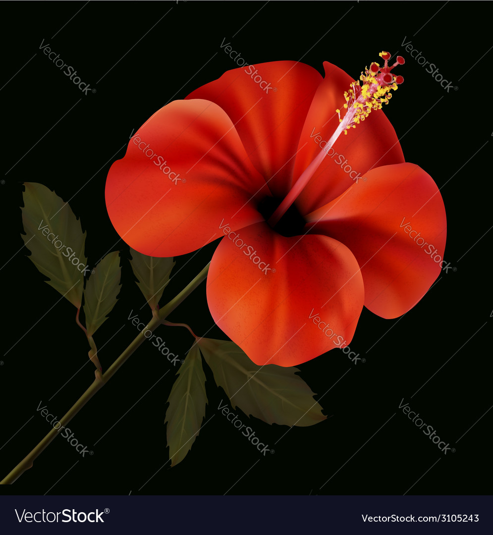 Beautiful red flower on a black background vector | Price: 1 Credit (USD $1)