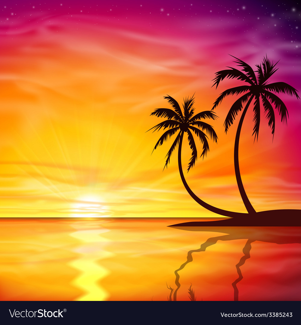 Sunset sunrise with palm trees vector