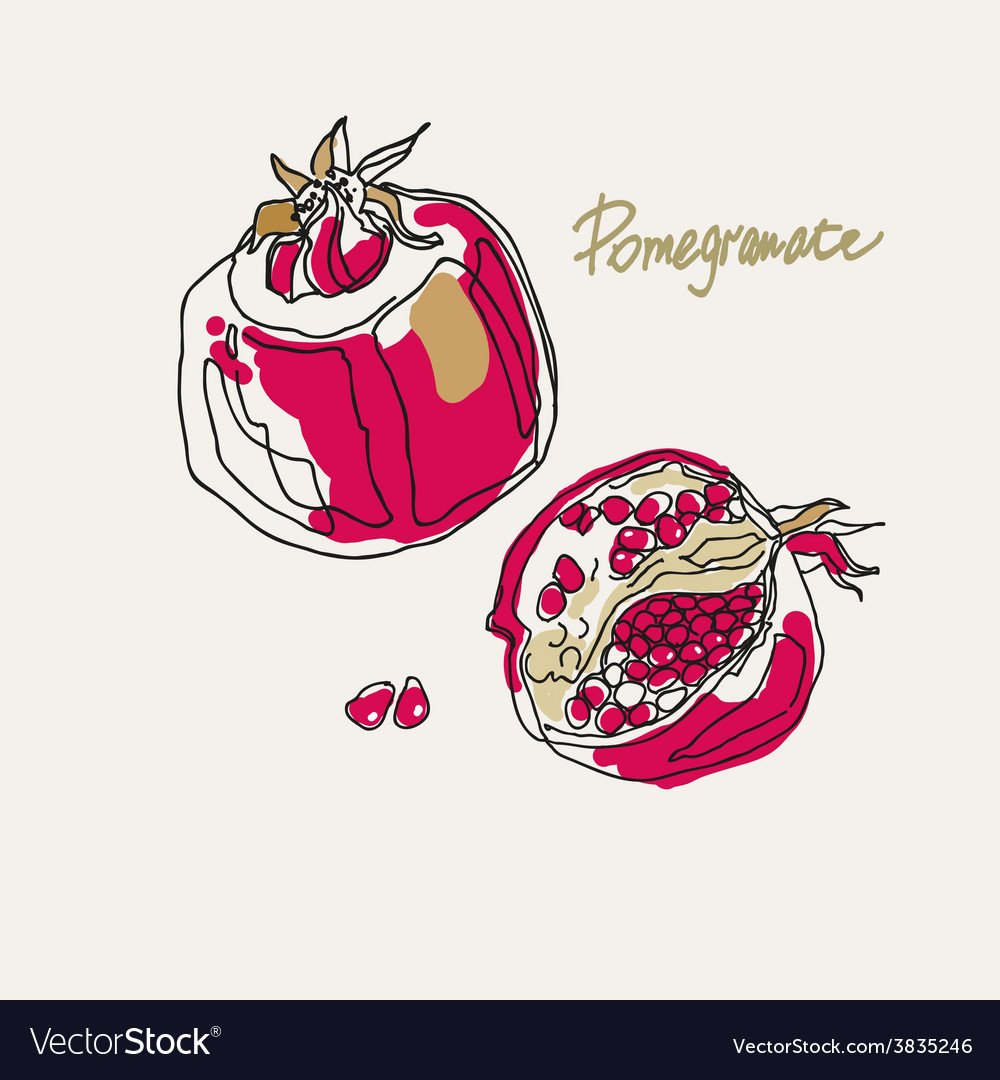 Drawing of a stylized pomegranate vector | Price: 1 Credit (USD $1)
