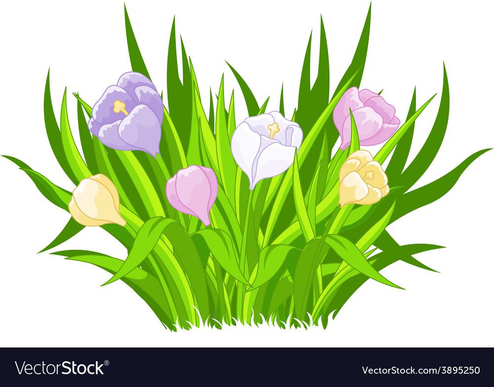 Crocus bouquet vector | Price: 3 Credit (USD $3)